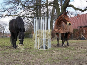 Pferderaufe