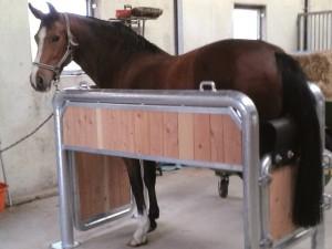 Untersuchungsstand für Pferde